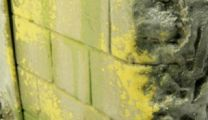 Vallejo Weathering Moss and Lichen 73.827