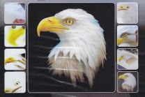 H & S Freehand Sjabloon Eagle Wildlife 410129