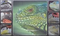 H & S Freehand Sjabloon Iguana Wildlife 410134