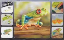 H & S Freehand Sjabloon Frog Wildlife 410133